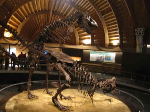 Museo del Jurasico